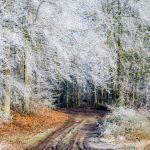 Wald bei Panker