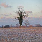 Portfolio-Baum